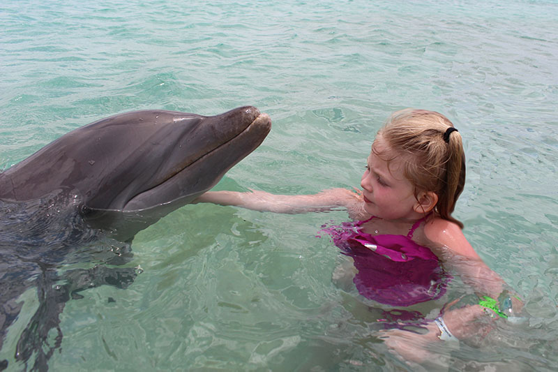 swimming with dolphins bahamas